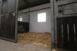 Unsere hellen Boxen in der Halle mit Blick in die Stallgasse und nach draußen.