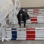 Ein Pferd springt ohne Reiter über einen Sprung.