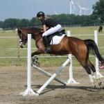 Eine Reiterin spring mit Pferd über einen Sprung.