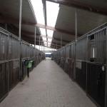 Eine helle Stallgasse mit zwei gegenüberliegenden Reihen Pferdeboxen.
