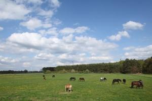 Pferde genießen ihre Zeit auf einer großzügigen Weide.